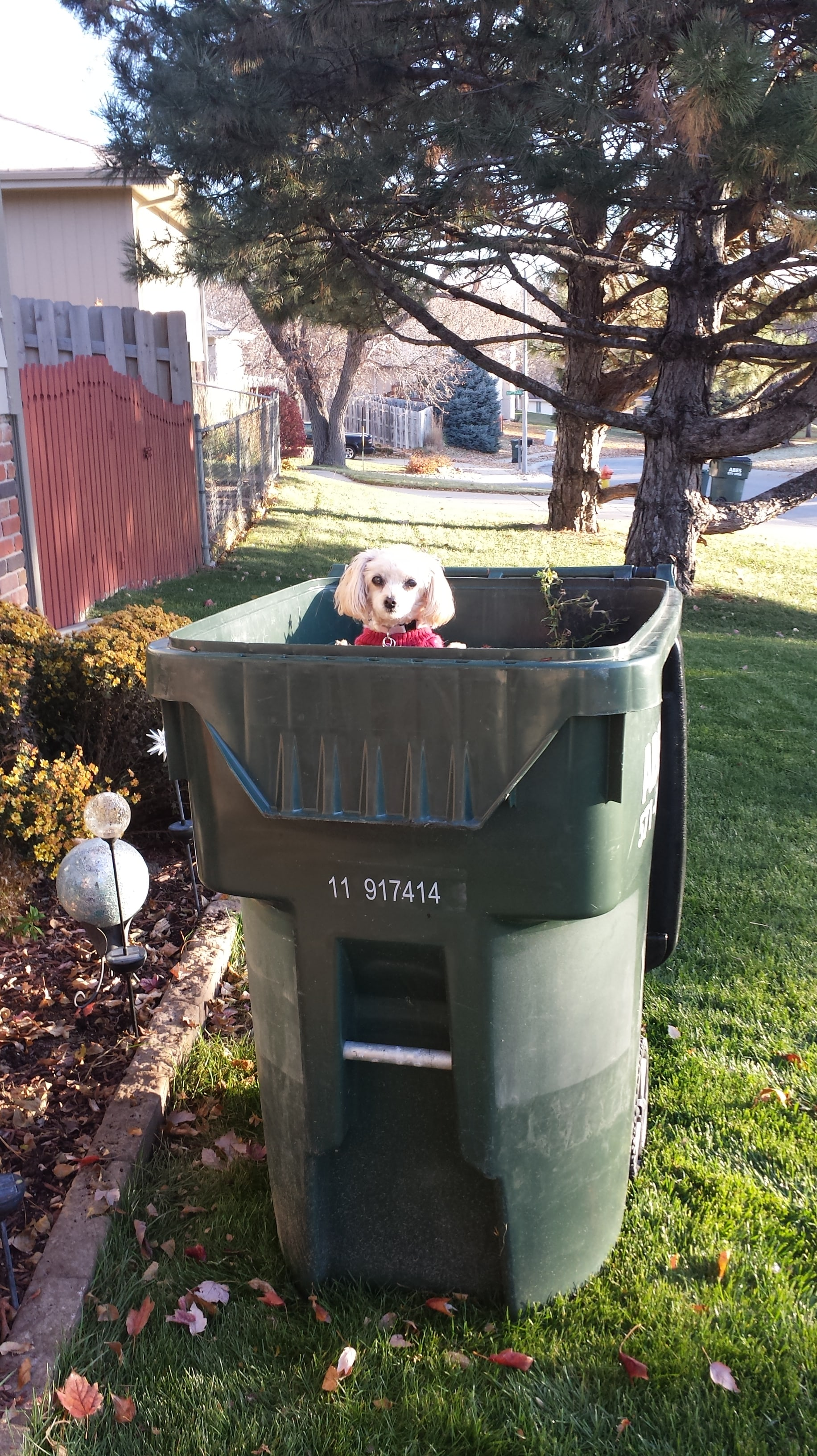Puppy in trash can
