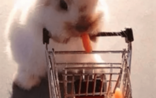 Bunny shopping cart