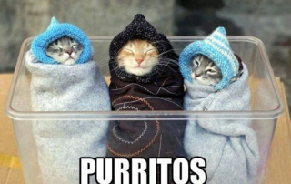 3 kittens bundled up-Purritos