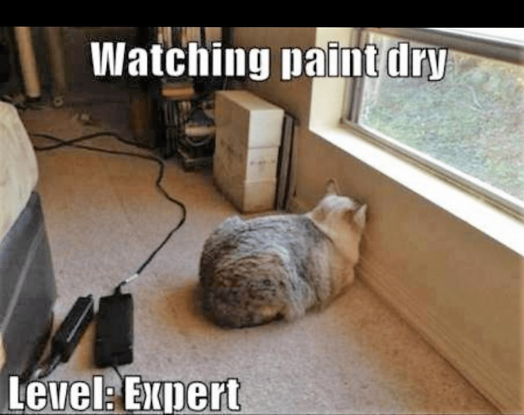 Expert at watching paint dry