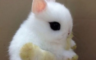 Tiny white bunny