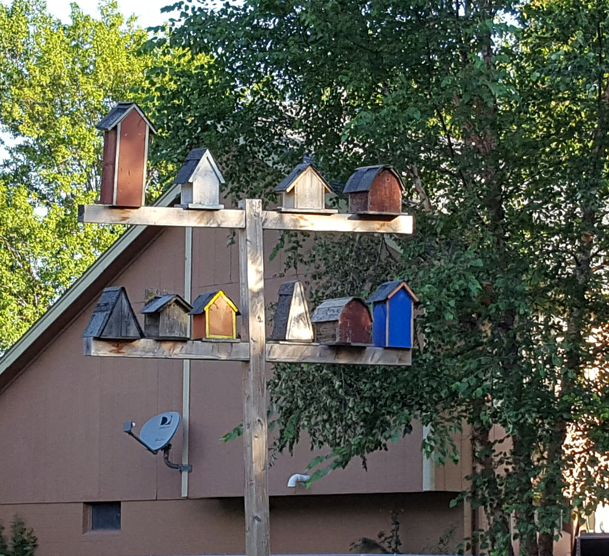 Bird apartments