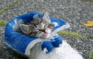 Kitty in slipper
