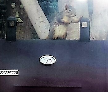 Squirrel on grill
