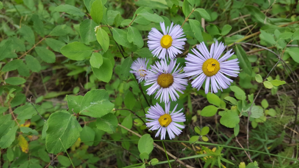 Wildflowers on the trail to Bridal Veil Falls