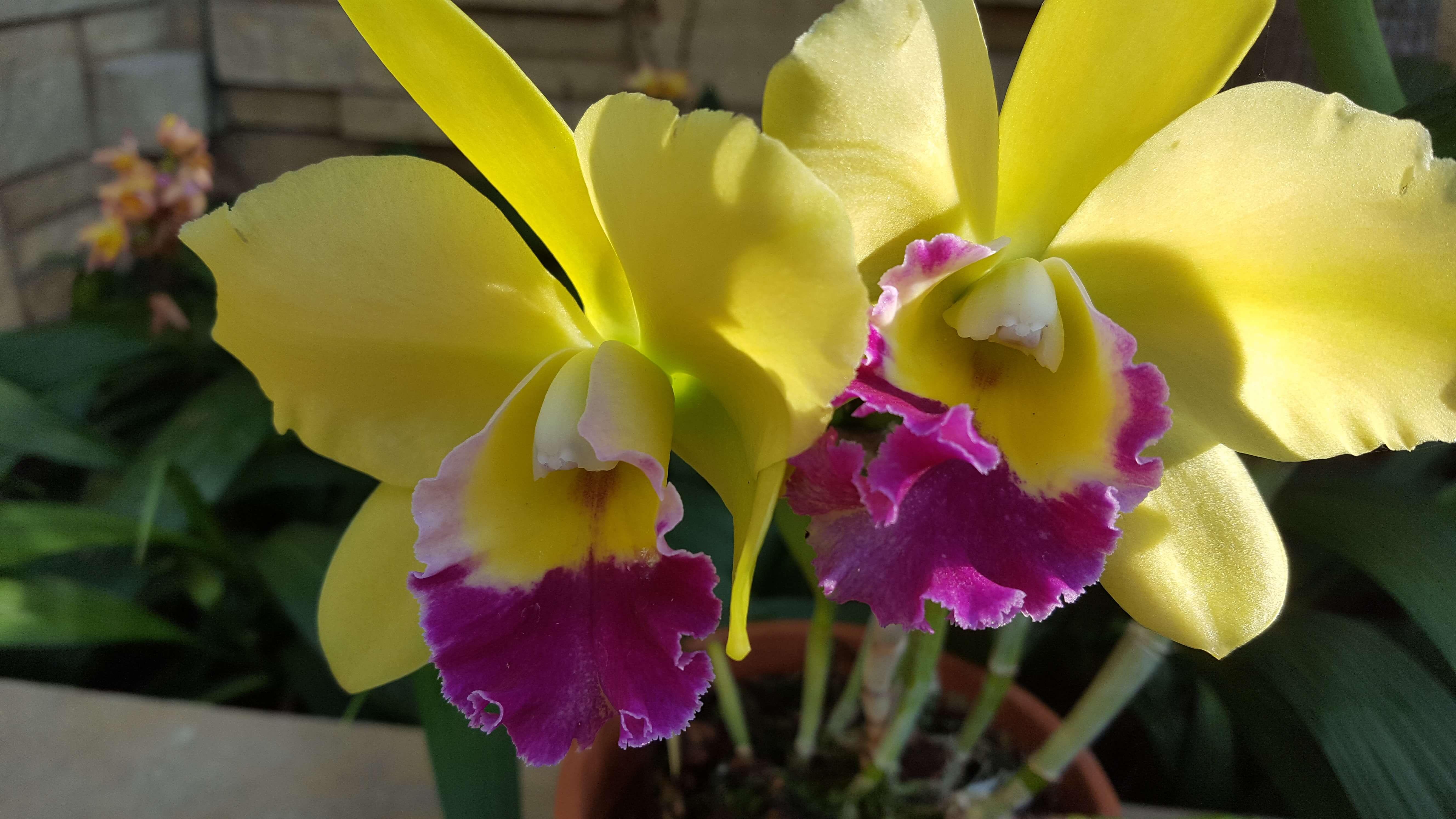 Orchids at Lauritizen Gardens