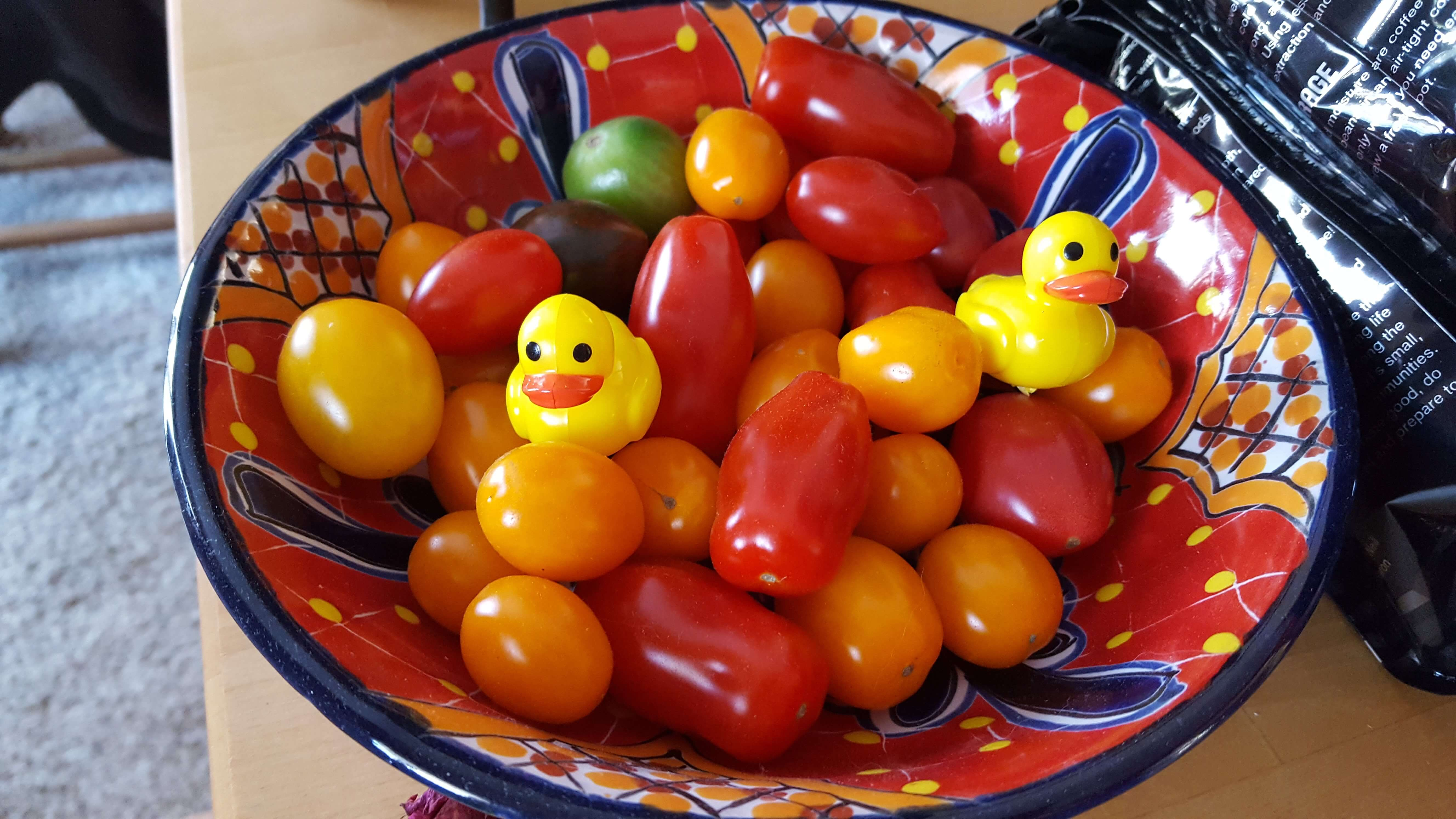 Small colorful tomatoes