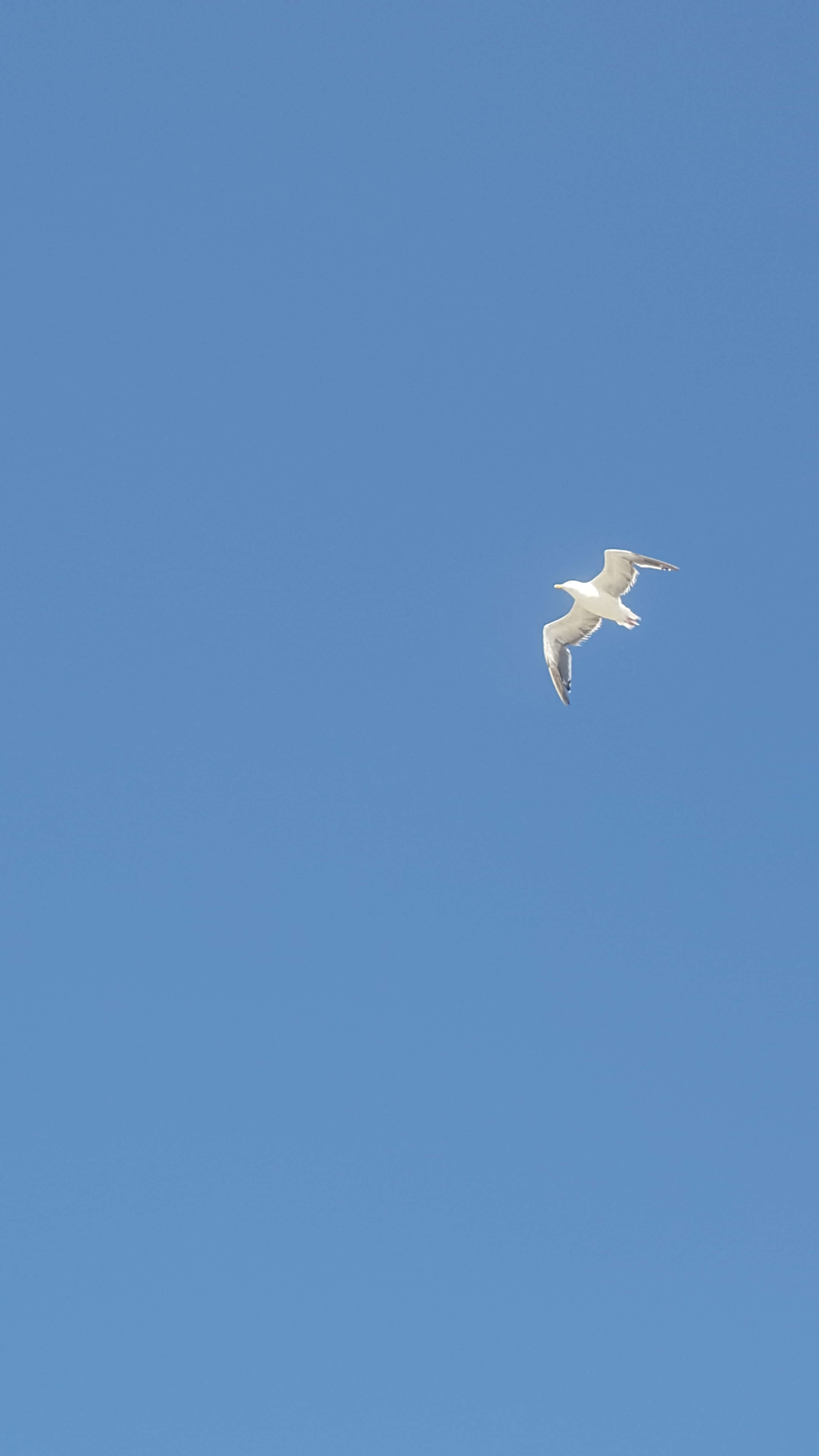 White seagull against a blue sky
