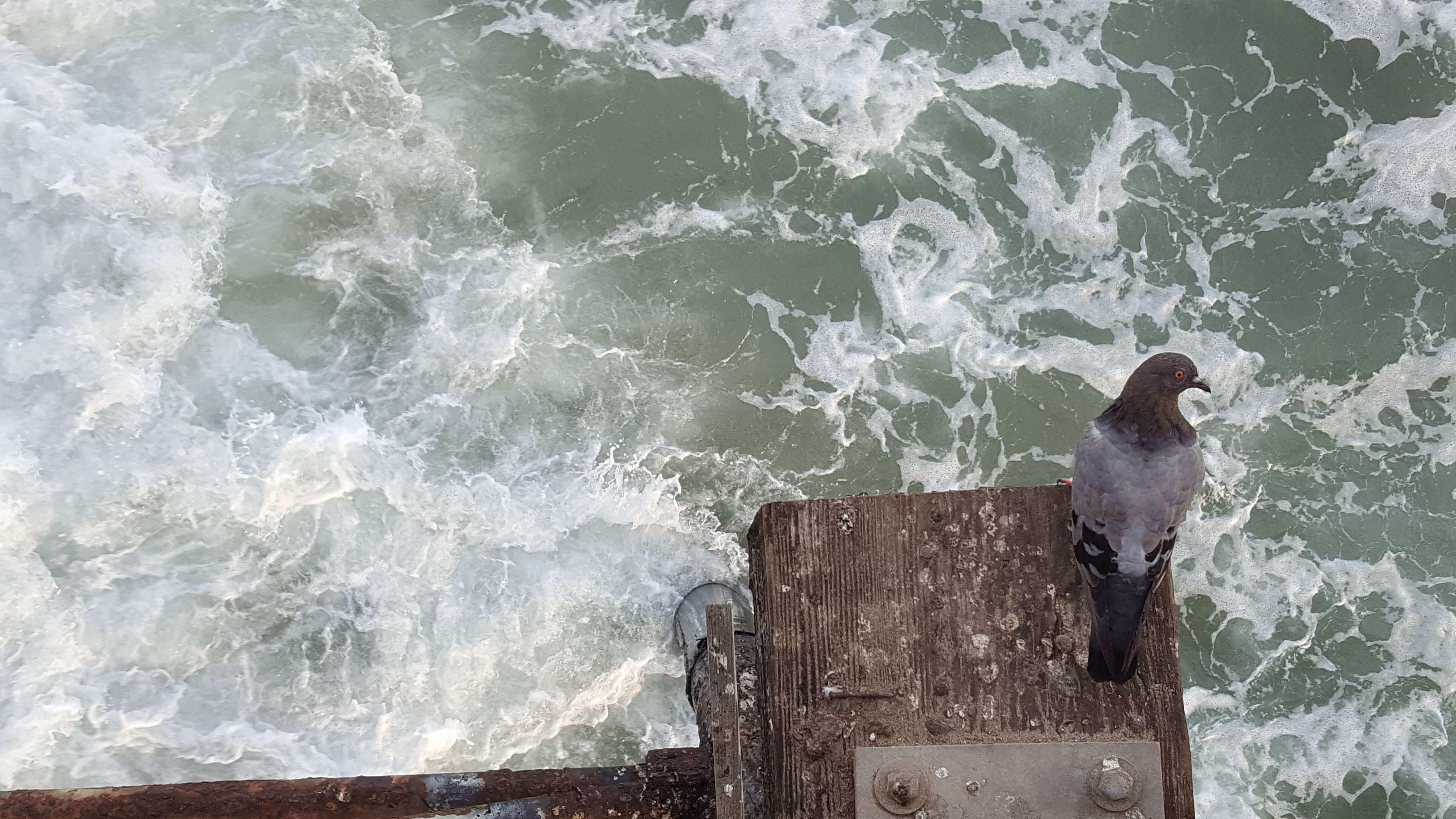 Seagull at Oceanside Pier
