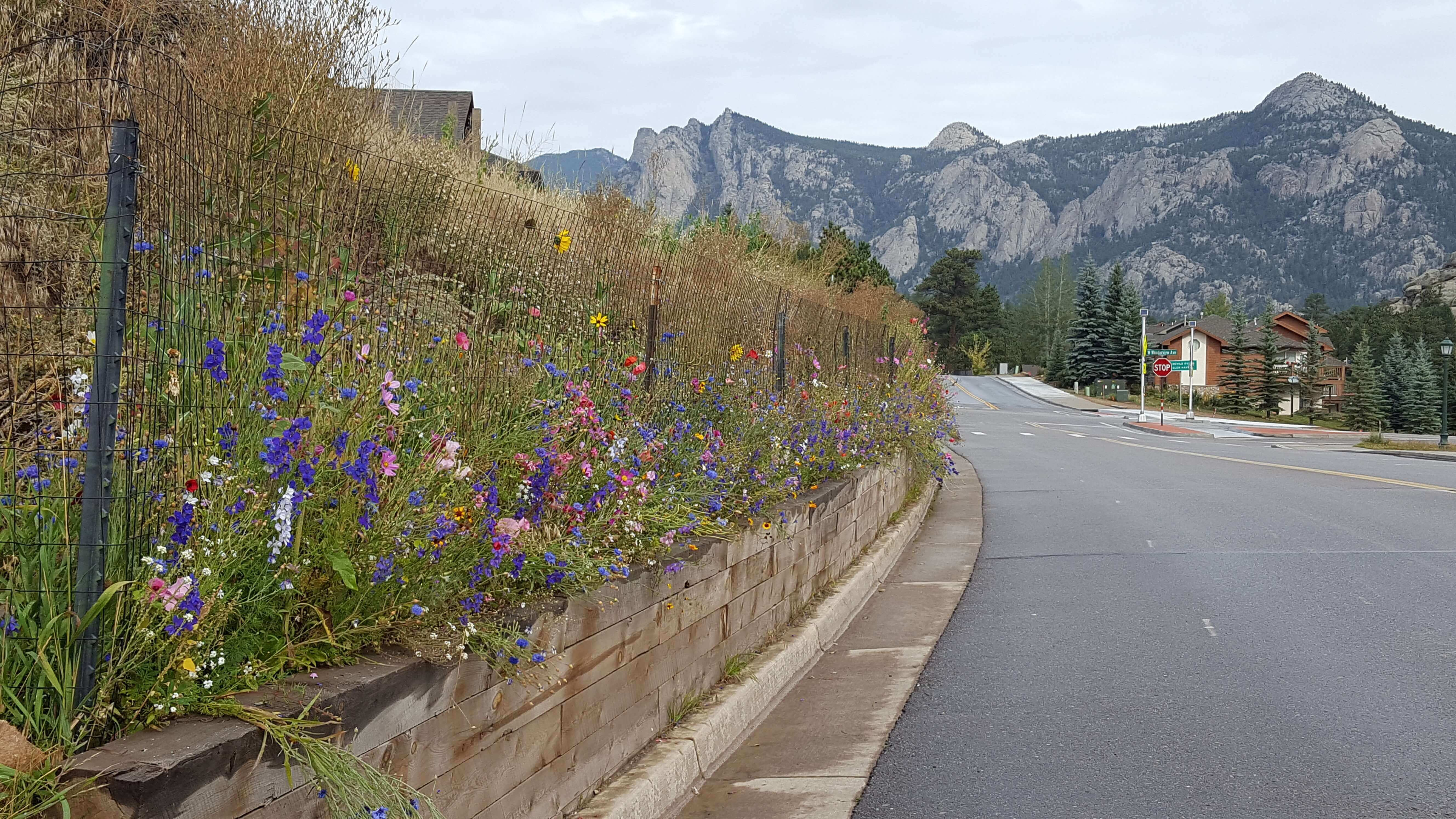 Wildflowers and Lumpy Ridge, Estes Park