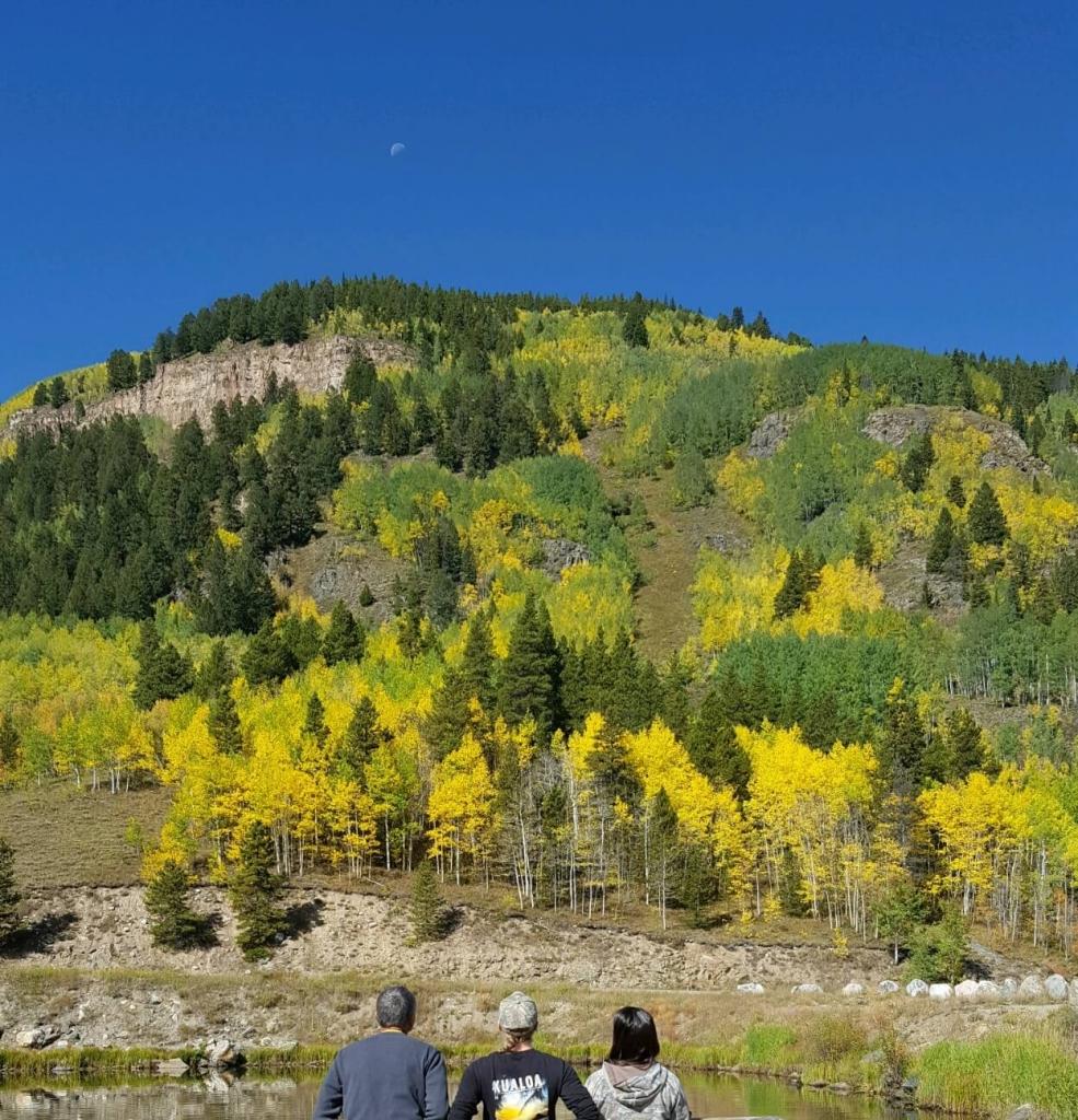 Vibrant blue Colorado sky and Quaking aspens