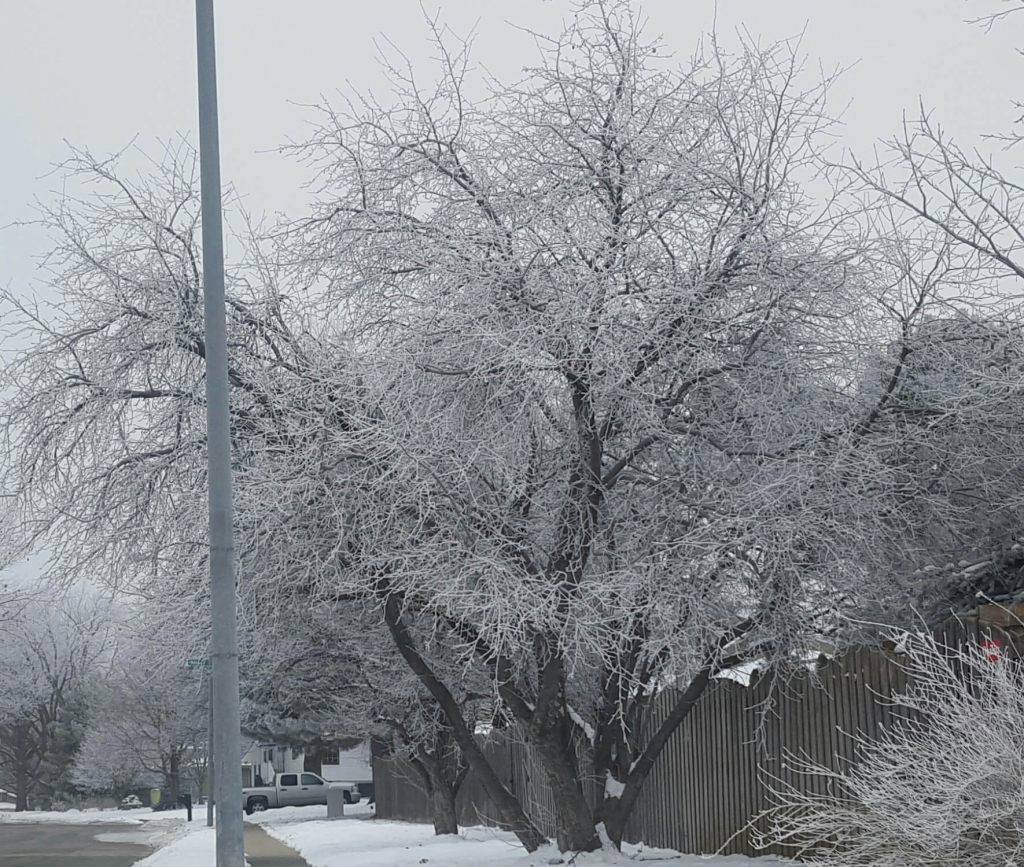 Beautifully-frosted trees