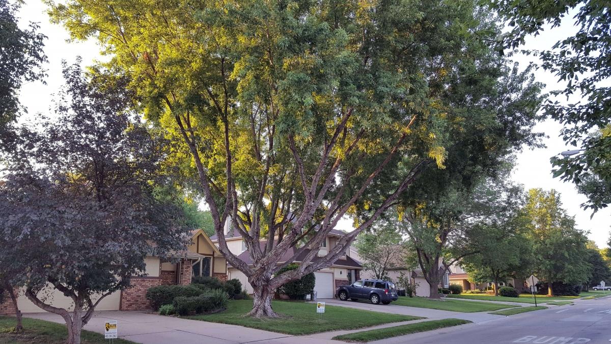 Splendid sprawling tree