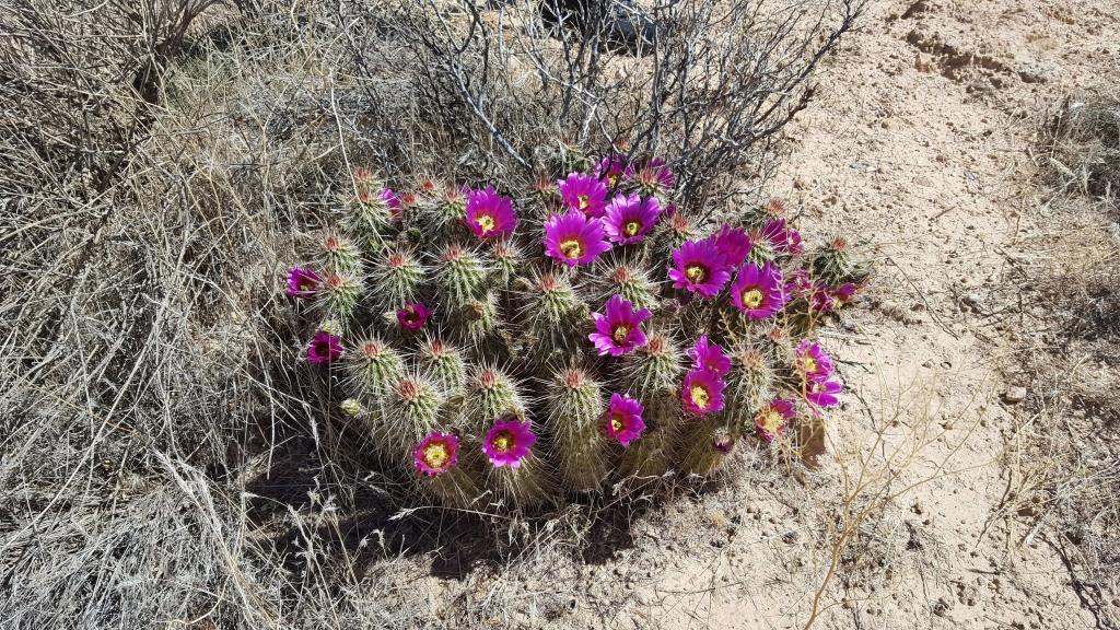 Scenic Apache Trail