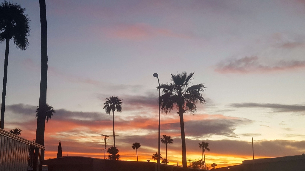 Palm trees over Apache Junction, AZ