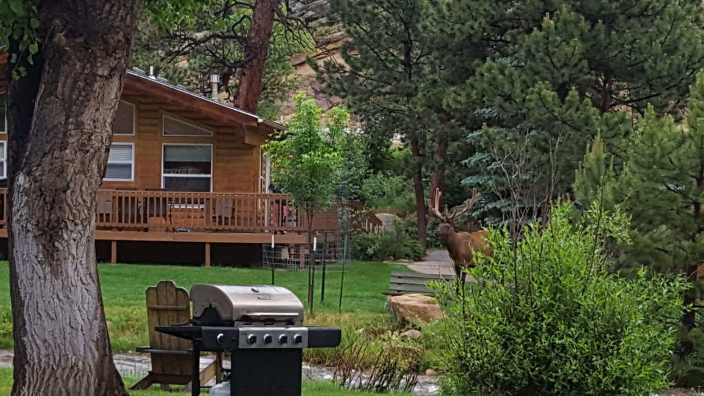 Elk visits Riverview Pines in Estes Park