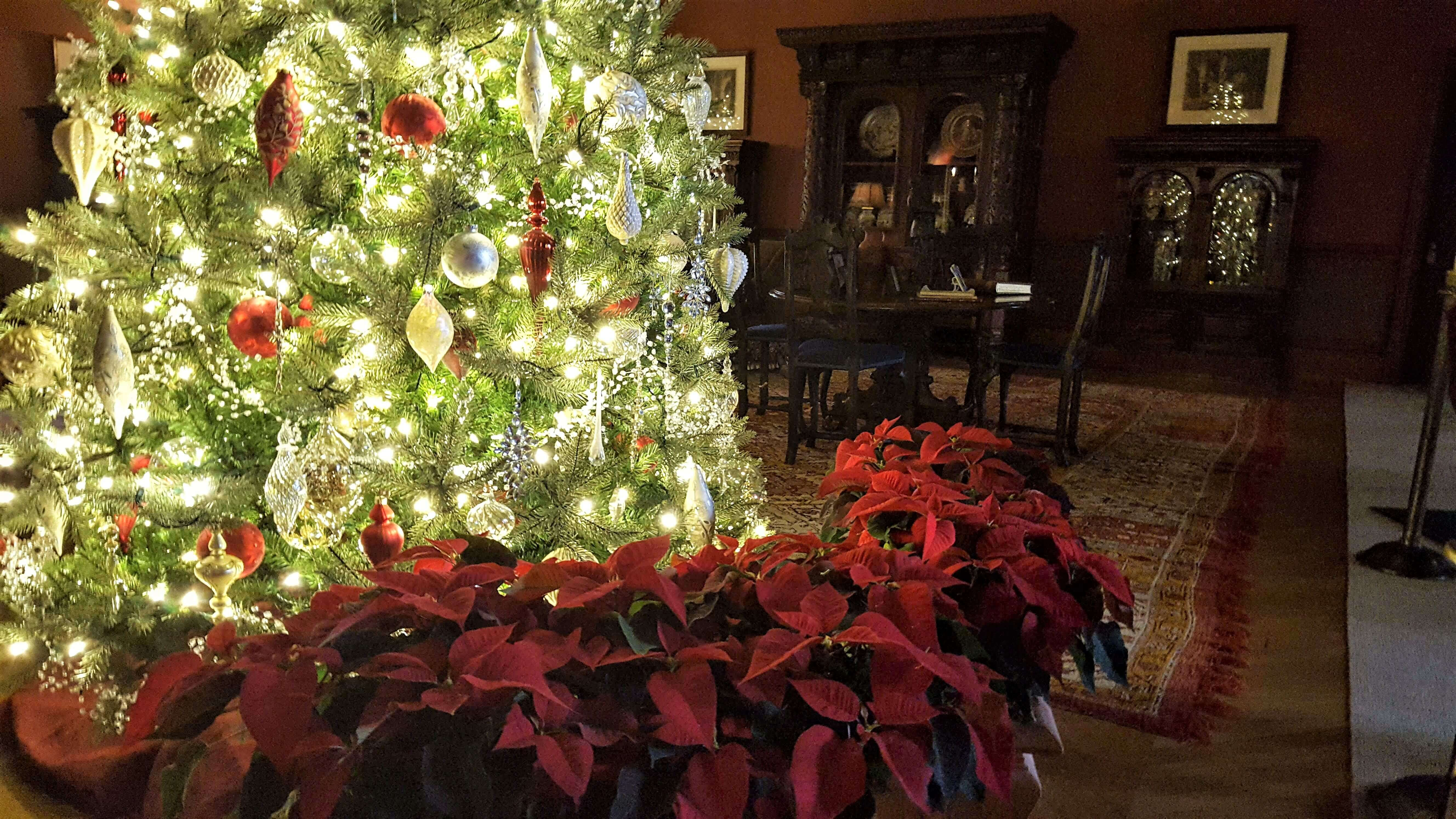 Tree and poinsettia at the Biltmore Estate