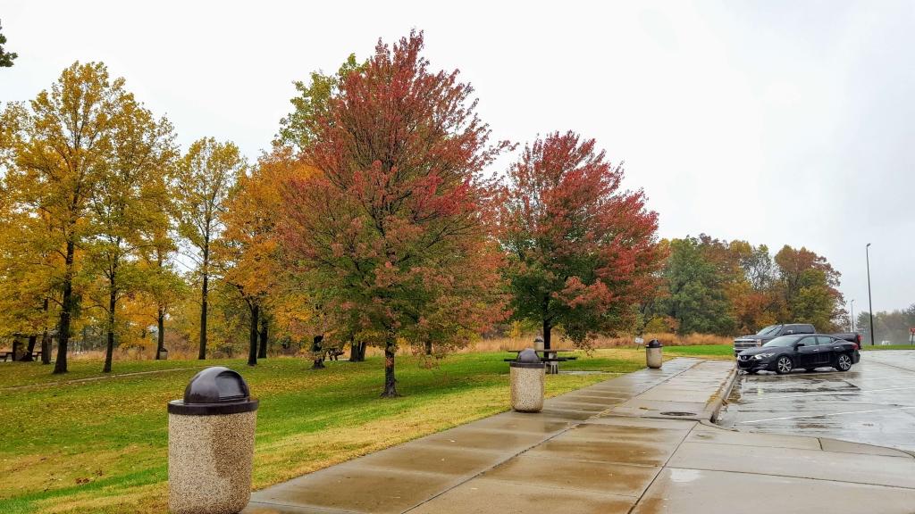 Multi-colored fall day