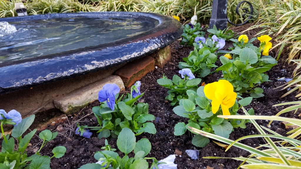 Fountain and pansies on Belmont Mansion property in Nashville, TN