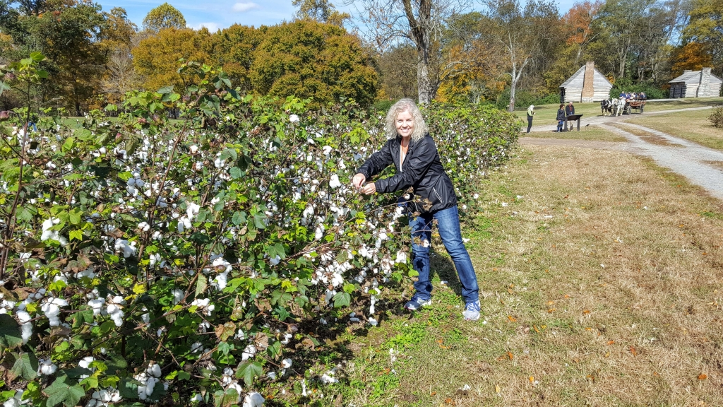 Picking cotton at the Hermitage, Nashville, TN